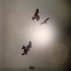 vermutlich piraten II, 2014, 80 x 57 cm.jpg